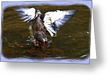 Spread Your Wings Greeting Card by Susan Leggett