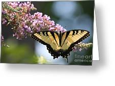Spreading My Wings Greeting Card