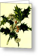 Sprig Of Holly With Berries And Flowers Vintage Poster Greeting Card