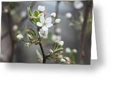Spring 3 Greeting Card