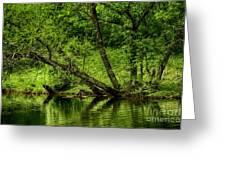 Spring Along West Fork River Greeting Card