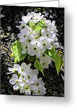 Spring Apple Blossoms Greeting Card