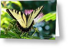 Spring Arrival Greeting Card
