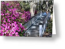 Spring At Magnolia Plantation 4 Greeting Card
