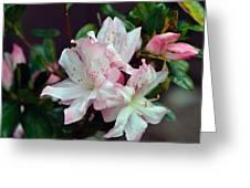 Spring Azalea Greeting Card