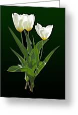 Spring - Backlit White Tulips Greeting Card