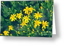Spring Greeting Card by Barbara Shallue