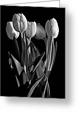 Spring Beauties Bw Greeting Card