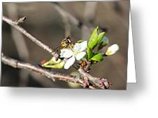 Spring Bee On Apple Tree Blossom Greeting Card