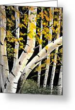 Spring Birch Greeting Card