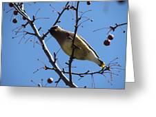 Spring Bird And Berries Greeting Card