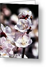 Spring Bloom 3 Greeting Card