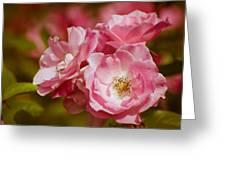 Spring Roses Greeting Card