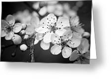 Spring Blooms 6690 Greeting Card