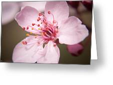 Spring Blooms 6697 Greeting Card