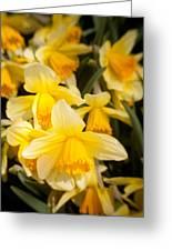 Spring Blooms 6739 Greeting Card