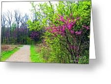 Spring Blooms Along The Path Greeting Card