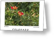 Spring Blooms In Colorado Greeting Card