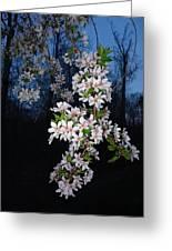 Spring Blooms Greeting Card by Otis L Stanley