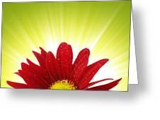 Spring Blossom Greeting Card
