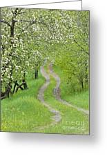 Spring Blossom Road Greeting Card