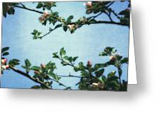 Spring Blossoms 2.0 Greeting Card
