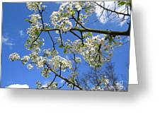 Spring Blossoms 2014 Greeting Card
