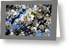 Spring Blossoms, Baltimore Greeting Card