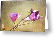 Spring Blossoms - Digital Sketch Greeting Card