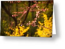 Spring Blossoms I Greeting Card