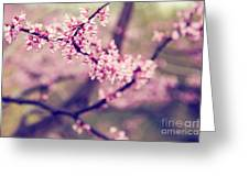 Spring Blossoms II Greeting Card