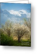 Spring Blossoms Storm Approaching Greeting Card