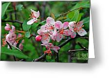 Spring Blossoms West Virginia Greeting Card
