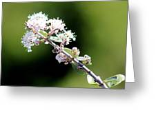 Spring Blossoms White 031015aa Greeting Card
