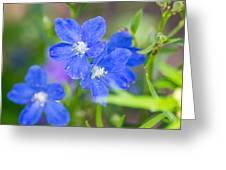 Spring Blue Greeting Card