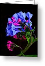 Spring Bluebells Greeting Card