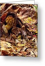 Spring Bounty Morel Mushroom Greeting Card
