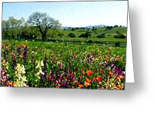 Spring Bouquet At Rusack Vineyards Greeting Card