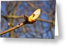 Spring Bud Greeting Card