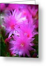 Spring Cactus Greeting Card
