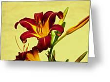 Spring Candor Greeting Card