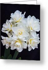 Spring Cheer Daffodil 2 Greeting Card