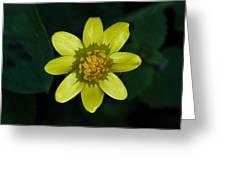 Spring Cheer Greeting Card