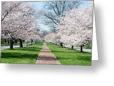 Spring Cherry Trees Greeting Card