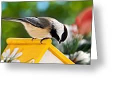 Spring Chickadee Greeting Card