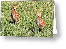 Spring Chicks  Greeting Card