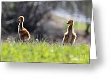 Spring Chicks In The Sunshine Greeting Card