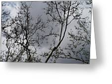 Spring Clouds Greeting Card