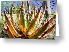 Spring Color In The Desert Greeting Card