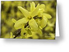 Spring Comes Sofly Greeting Card